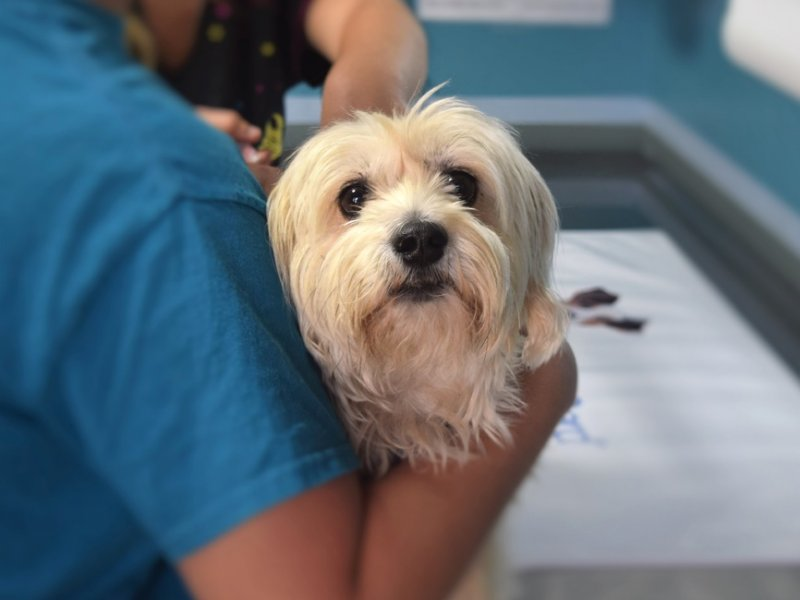 Clinica Veterinaria Pet Point